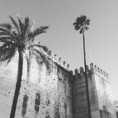 #palms #palmeras