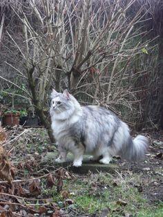 Cat with a Garden