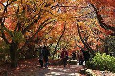 japanese gardeni mifuneyama   御船山楽園 - Picture of Mifuneyama Rakuen, Takeo - TripAdvisor Japan Places To Visit, Takeo, Kyushu, Okinawa, Trip Advisor, Gardens, Japanese, Photo And Video, Plants