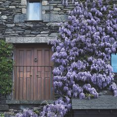 14 Wisteria Lane  by ctm30