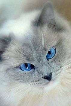 Piercing blue eyes ... I must obey them!