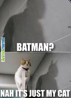 Cat memes It's just you...