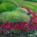 Use plants for your landscaping that are easy to grow and bring beauty year after year.