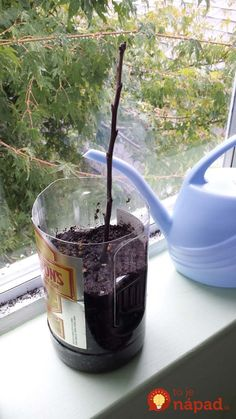How to grow a tree from a twig Growing Fruit Trees, Growing Tree, Trees And Shrubs, Trees To Plant, Gardening For Beginners, Gardening Tips, Flower Gardening, Plant Cuttings, Propagation