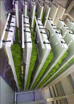 Hydroponics fodder system
