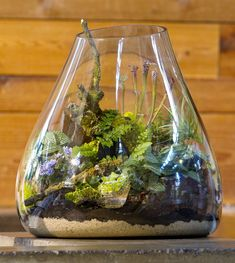 A lush little landscape in a handblown glass terrarium includes ferns, African violets, silvery-leafed Fittonia and baby tears, as well as a few carnivorous pitcher plants reaching toward the opening.