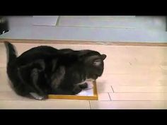 主人把貓睡覺的箱子偷偷換掉之后...