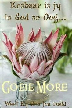 Protea Good Night Image, Good Morning Good Night, Good Morning Wishes, Day Wishes, Good Morning Quotes, Cute Quotes, Happy Quotes, Get Well Soon Quotes, Birthday Qoutes