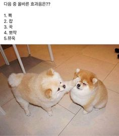 Like Animals, Cute Baby Animals, Animals And Pets, Funny Animals, Big Dogs, Cute Dogs, Dogs And Puppies, Cute Babies, Funny Animal Pictures