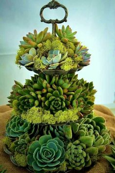 Succulent tree .An evergreen everlasting arrangement.Perfect for the table.