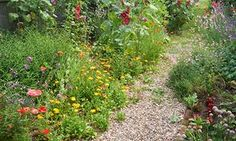 Need Some Gardening Inspiration? Here's Where I Find Mine - Alys Fowler : The Guardian