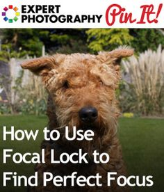 How to Use Focal Lock to Find Perfect Focus » Expert Photography