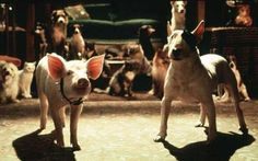 The Pig and My Favorite dogs - Bull Terrier
