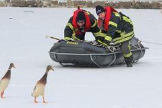 Mit dem Schlauchboot pirschen sich die Feuerwehrleute an die beiden japanischen Laufenten heran...