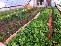 Simple hoop house polyculture, reducing fertilizer and pesticide needs.