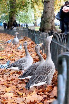 #Hide park #London