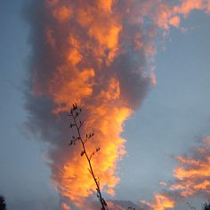 Reggae, Birch, Clouds, Shapes, Celestial, Sunset, Outdoor, Ska, Sunsets