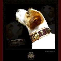 Unique Dog Collars, Dog Activities, Wild Dogs, Terrier Dogs, Dog Accessories, Pet Toys, Your Pet, Cool Stuff, Stuff To Buy