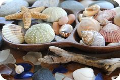 A collection of seaside treasures