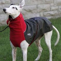 Great White North Winter Dog Coat for Active Dogs - Doggy Boho