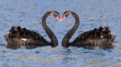 kiss day wallpapers download for ipad