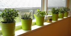This image is about: Secret indoor vegetable gardening, and titled: Indoor Vegetable Gardening Tips, with description: , also has the following tags: easy indoor vegetable gardening,indoor vegetable gardening at home,indoor vegetable gardening ideas,modern indoor vegetable gardening,simple indoor vegetable gardening, with the resolution: 800px x 406px