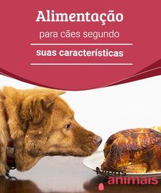 Alimentação para cães segundo suas características  Parte de #cuidar bem de seu cão é saber como alimentá-lo, mas o que muitos donos não levam em consideração é que os cães têm #necessidades alimentares que vão bem além de sua 3raça ou de seu #tamanho. #ALIMENTAÇÃO