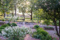 Takana, Garden, Plants, Garten, Gardens, Lawn And Garden, Tuin, Plant, Planting