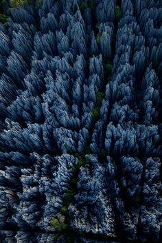 The Tsingy Forest, otherwise known as The Forest of Knives, in Madagascar.