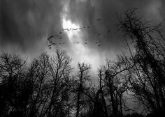 Winter Trees Moving Sky - Original fine art black and white landscape dreamscape photography by Bob Orsillo.  Copyright (c)Bob Orsillo / http://orsillo.com All Rights Reserved  Buy art online. Buy photography online