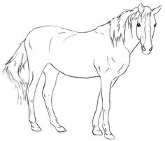 How To Draw A Horse ~ Draw Central