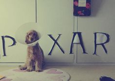 The Pixar Dog | The 100 Most Important Dog Photos Of All Time