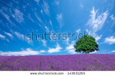 Single Country Flower Stock Photos, Images, & Pictures | Shutterstock