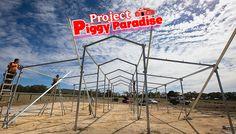 Project Piggy Paradise