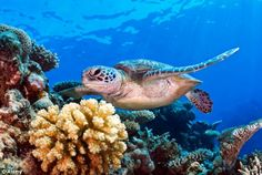 Why rare species found in coral reefs, tropical forests and alpine ...