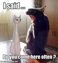 (via Funny Porcelain Cat Joke Meme Picture | Funny Joke Pictures)