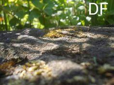 nahaufnahme steinboden im kleewald