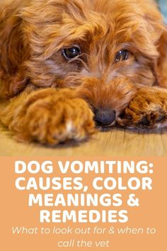 Dog Vomiting Causes, Color Meanings, and Remedies - Doodle Doods Home Remedies For Vomiting, Bland Diet For Dogs, Dog Throwing Up, Make Dog Food, Color Meanings, Food Out, Goldendoodle, Dog Care