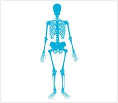 skeleton clip art human body clip art pinterest clip art rh pinterest com human skeleton clip art skeleton clip art images