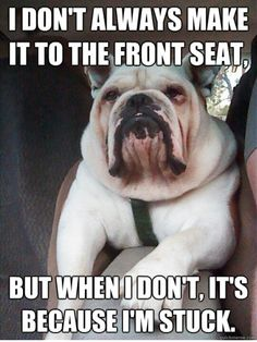 So true...I just gave up and let Dexter ride up front.  Cuts down on the amount of scattered dog hair if he's not in full on panic mode trying to get up front...