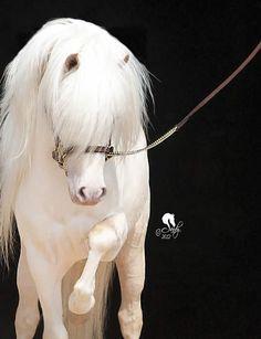 www.pegasebuzz.com | Equestrian photography : Sandy Revard