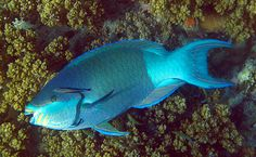 Socotra's Amazing Animals