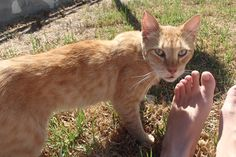 <p>This story comes from from Imgur user spicyadhesive who did something incredible for a stray cat she met while on vacation in Cyprus.</p>