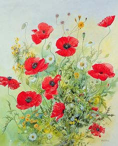 Poppies And Mayweed Painting  - Poppies And Mayweed Fine Art Print