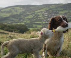 Dog Giving Milk To A Little Sheep  http://ift.tt/2iKzMCf