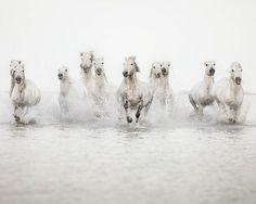White Horses !