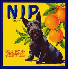 Tampa Florida Nip Scottish Terrier Dog Orange Citrus Fruit Crate Box Label Art Print