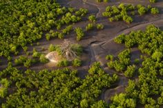 Le Delta du Saloum, patrimoine mondial de l'Unesco - Oceanium de Dakar, centre de plongée et association sénégalaise de protection de l'environnement.
