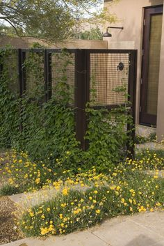 """Once the vines are established, this outdoor shower will make for a uniquely private retreat. Although I wouldn't necessarily recommend this method of privacy for cooler climates since the growing season isn't very long, the general concept can be carried into other parts of the yard, such as fences or small privacy screens."
