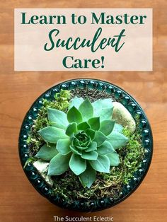 You, too, can grow gorgeous, Instagrammable succulents! Learn everything you need to know about succulent care, succulent propagation, proper watering, best lighting, cold-hardy succulents, trouble shooting and more! :) Pin now, read later - your succulents will thank you! #succulentcare #howtogrowsucculents